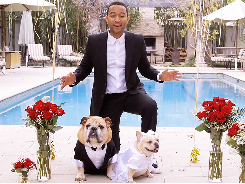 john-legend-dog-01-800