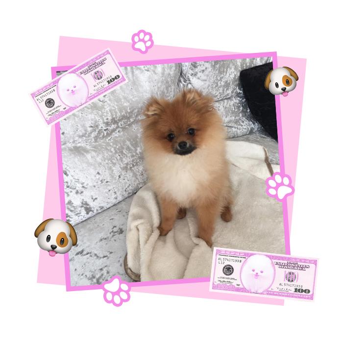 georgia kousoulou's dog